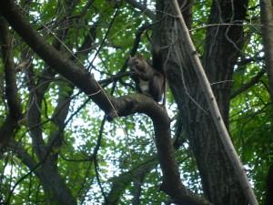 Veverița din Parcul Titan – vara 2014 în imagini